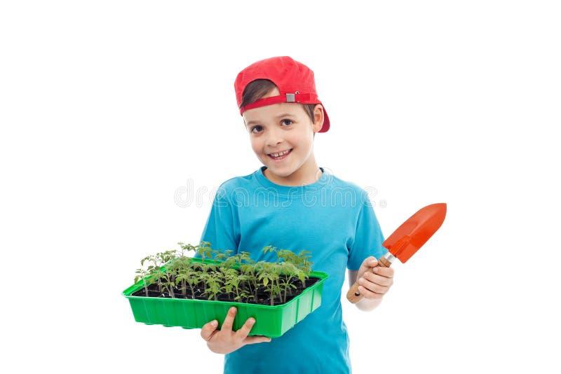 поднос томата сеянцев мальчика стоковое фото rf