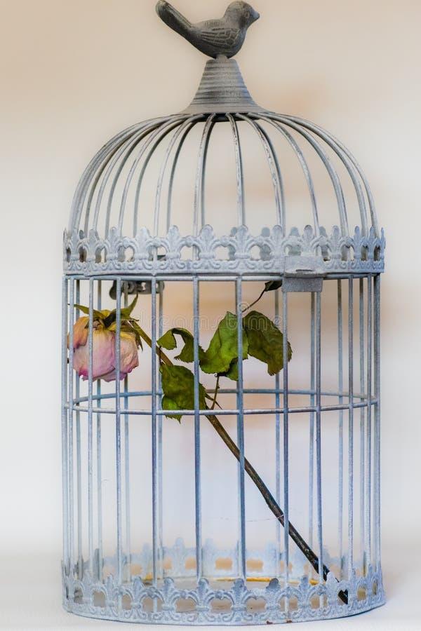 Поднял в клетку птиц стоковая фотография