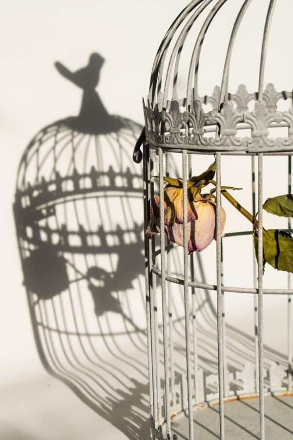 Поднял в клетку птиц стоковое изображение rf
