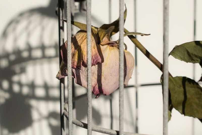 Поднял в клетку птиц стоковое фото