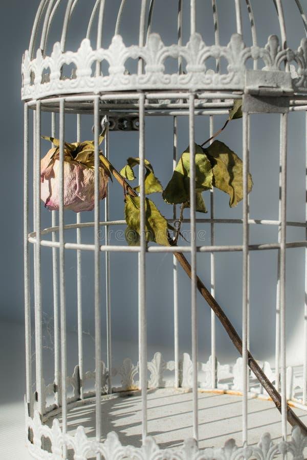 Поднял в клетку птиц стоковые фото