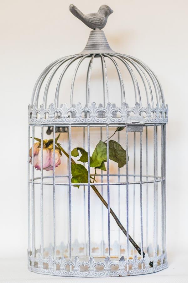 Поднял в клетку птиц стоковые фотографии rf