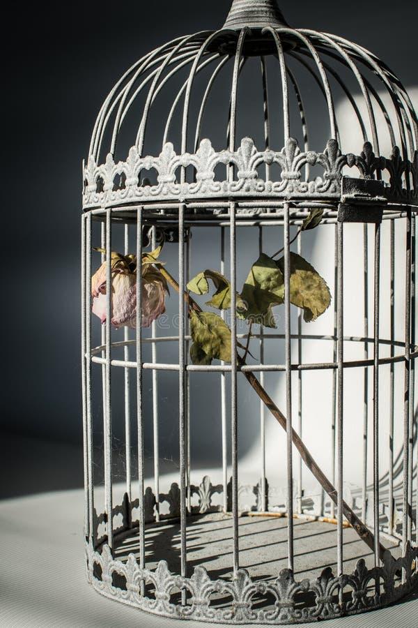 Поднял в клетку птиц стоковые изображения rf