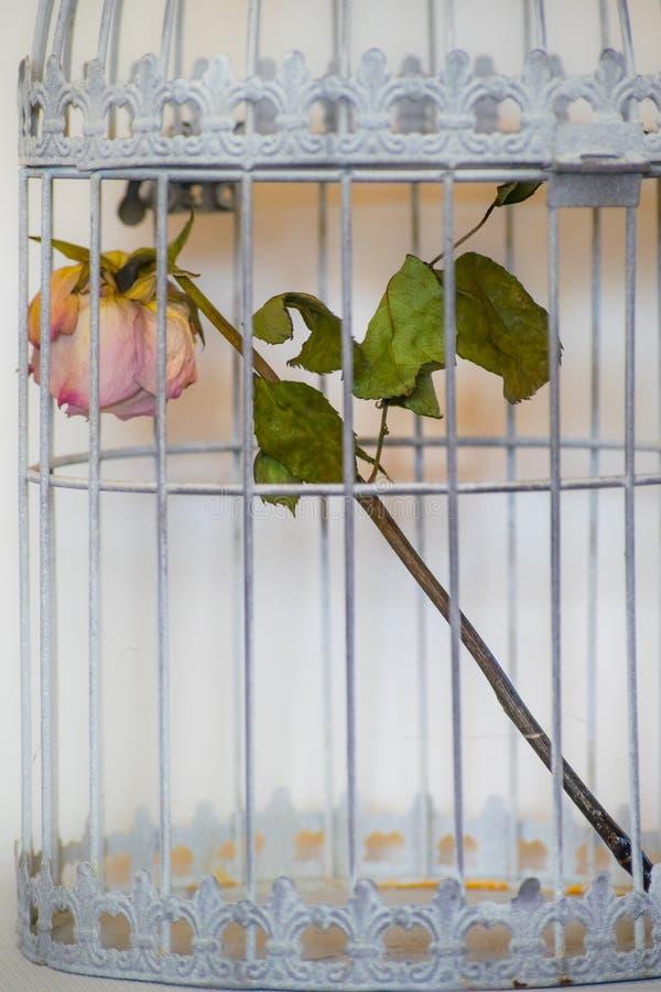 Поднял в клетку птиц стоковые изображения