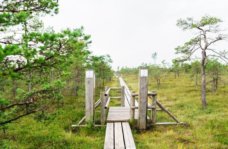 Поднятая трясина Променад в национальном парке Kemeri леса latvia стоковые фото