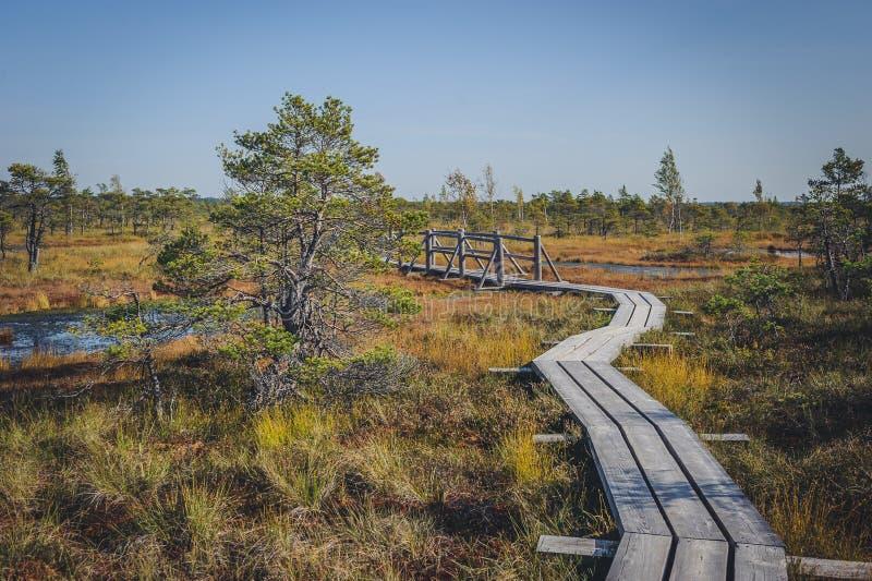 Поднятая трясина Променад в национальном парке Kemeri стоковое фото