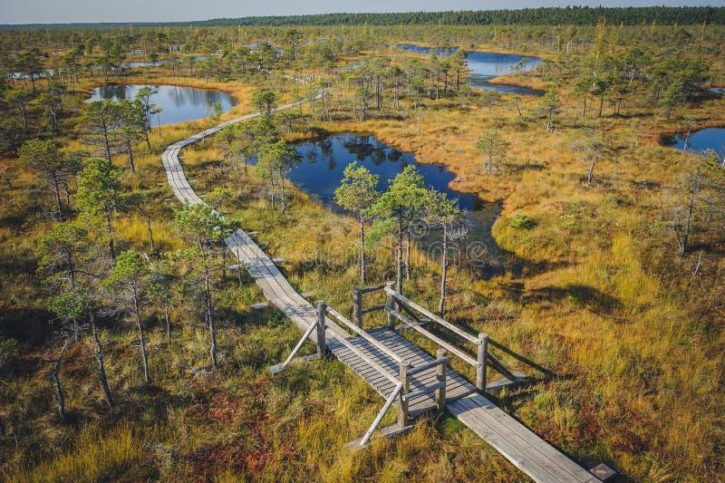 Поднятая трясина Променад в национальном парке Kemeri стоковые изображения