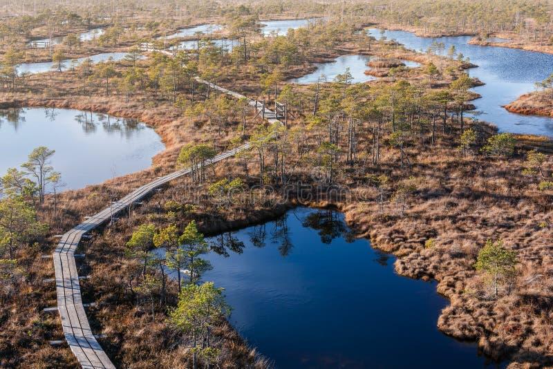 Поднятый променад трясины Национальный парк Kemeri в Латвии Лето стоковое фото rf