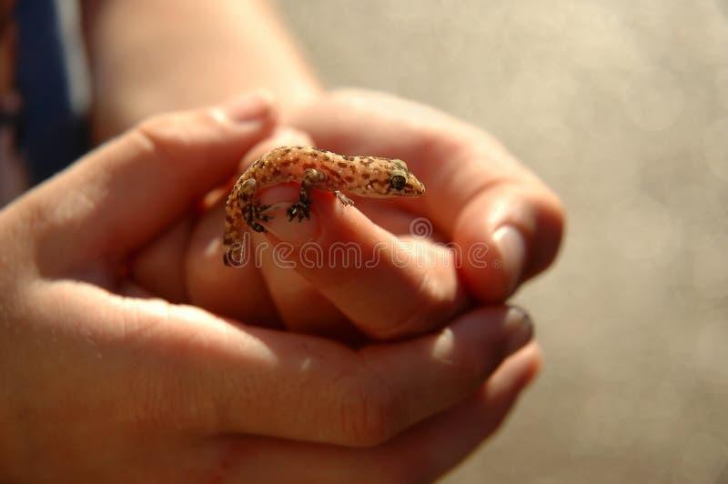 подоприте освещенный salamander стоковые фото
