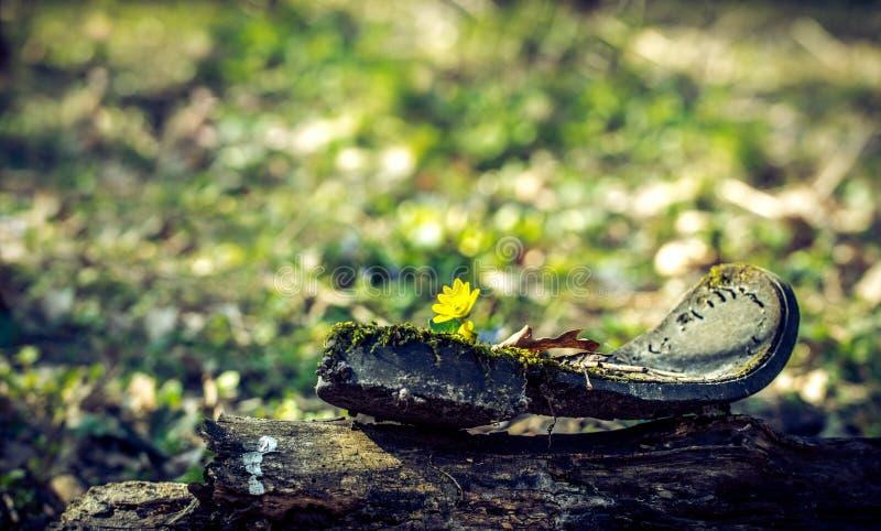 Подошва старого сломленного ботинка на солнечном glade леса стоковые изображения rf