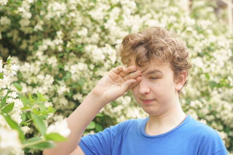 Подросток с аллергиями стоя в голубой футболке среди кустов жасмина и страдает от плохого здоровья стоковое изображение rf