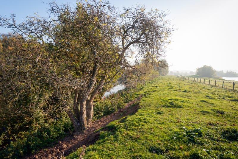 Подсвеченная съемка скачками сформированного дерева на ноге Dutc стоковые фотографии rf