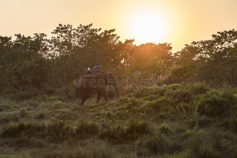 Подсвеченные непальские люди ехать слоны в национальном парке на заходе солнца, Непале Chitwan стоковое фото