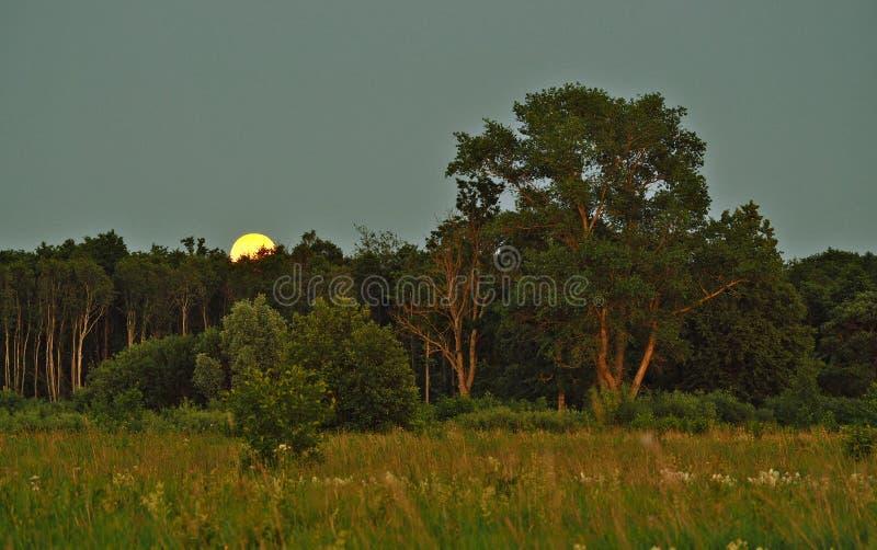 Подъем и свет луны над зеленым лесом стоковые изображения