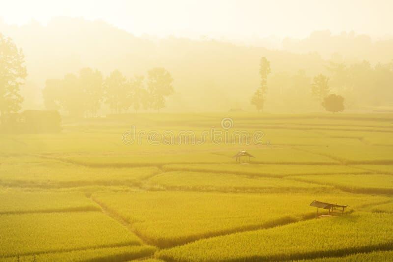Подъем Солнца с лист риса зеленых рисовых полей зелеными с деревом стоковые изображения