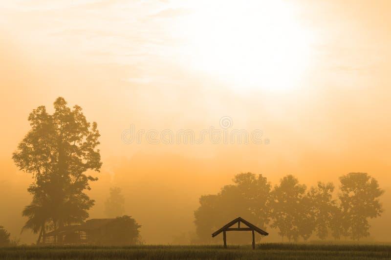 Подъем Солнца с лист риса зеленых рисовых полей зелеными с деревом стоковые изображения rf
