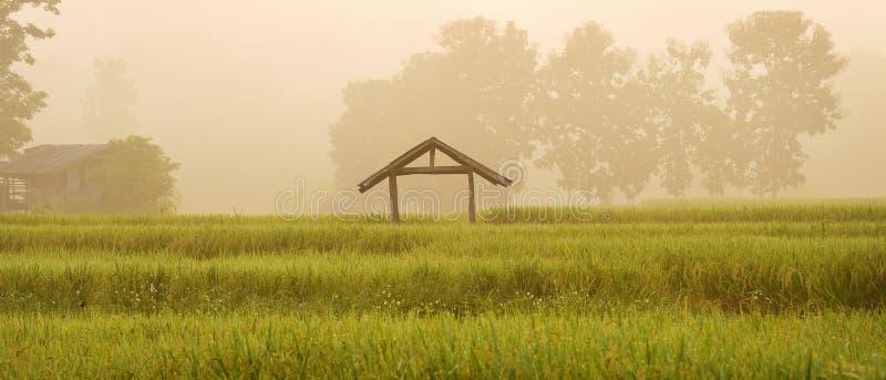 Подъем Солнца с лист риса зеленых рисовых полей зелеными с деревом стоковая фотография rf