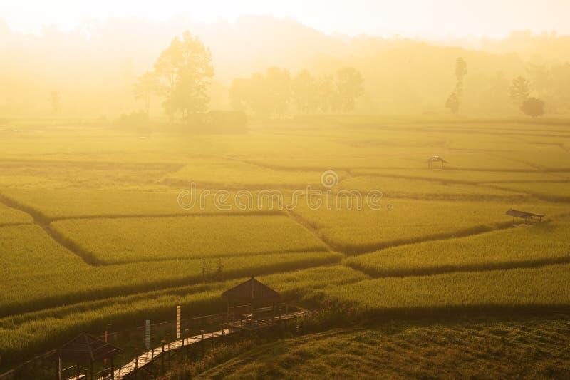 Подъем Солнца с лист риса зеленых рисовых полей зелеными с деревом стоковое фото rf