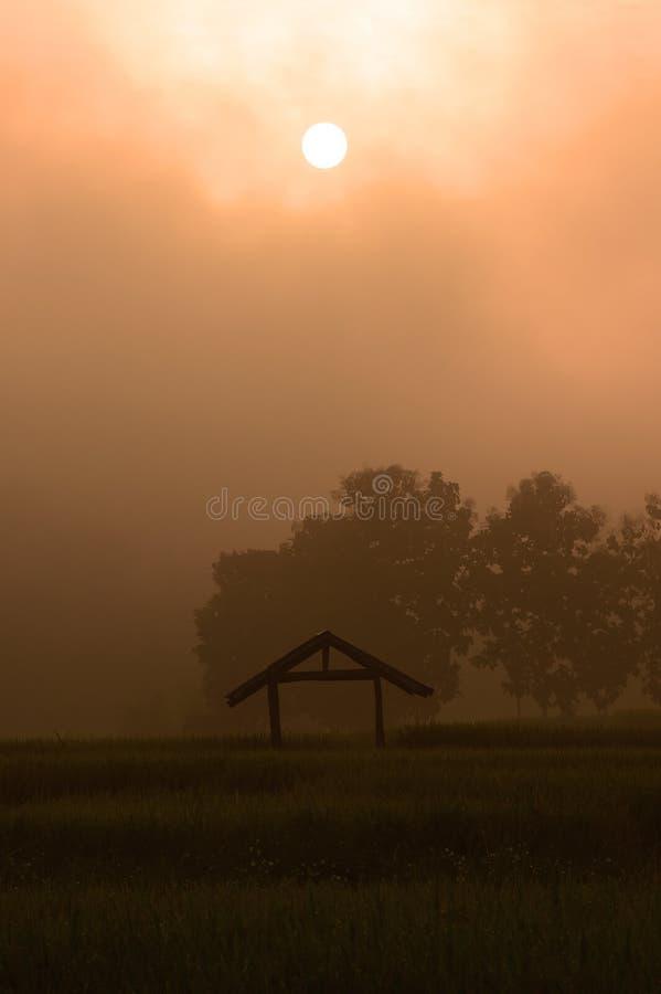 Подъем Солнца с лист риса зеленых рисовых полей зелеными с деревом стоковое фото