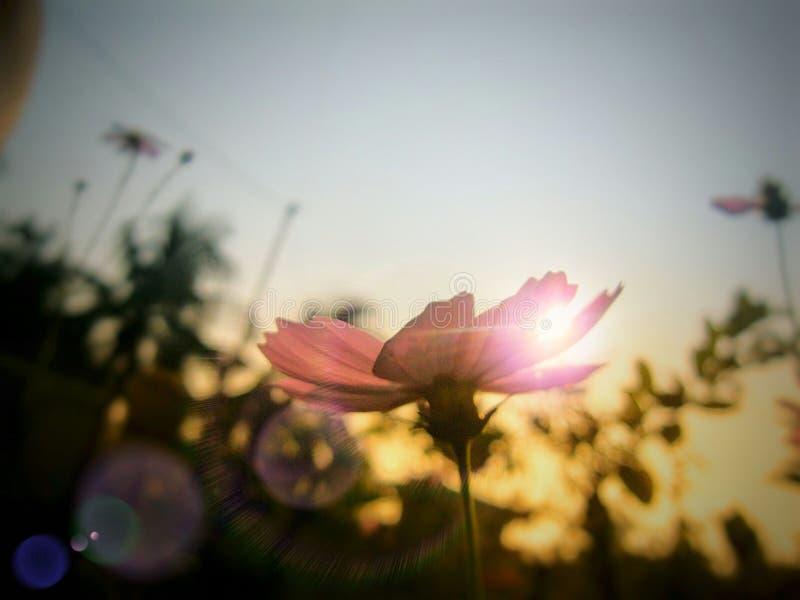 Подъем солнца стоковое фото rf