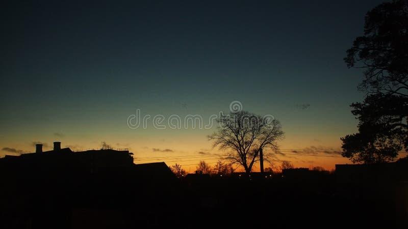 Подъем Солнця над деревьями и птицами собирается ladscape стоковые фотографии rf