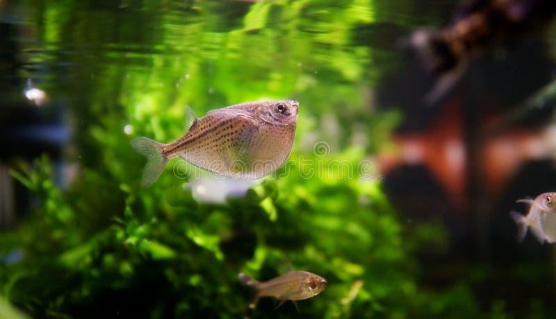 под заплыванием поверхности рыб стоковая фотография