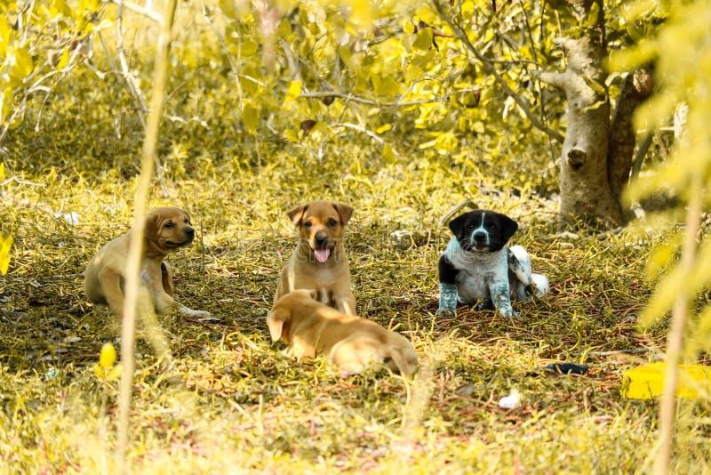 Под кустами на свалке играют марочные щенки стоковые фотографии rf