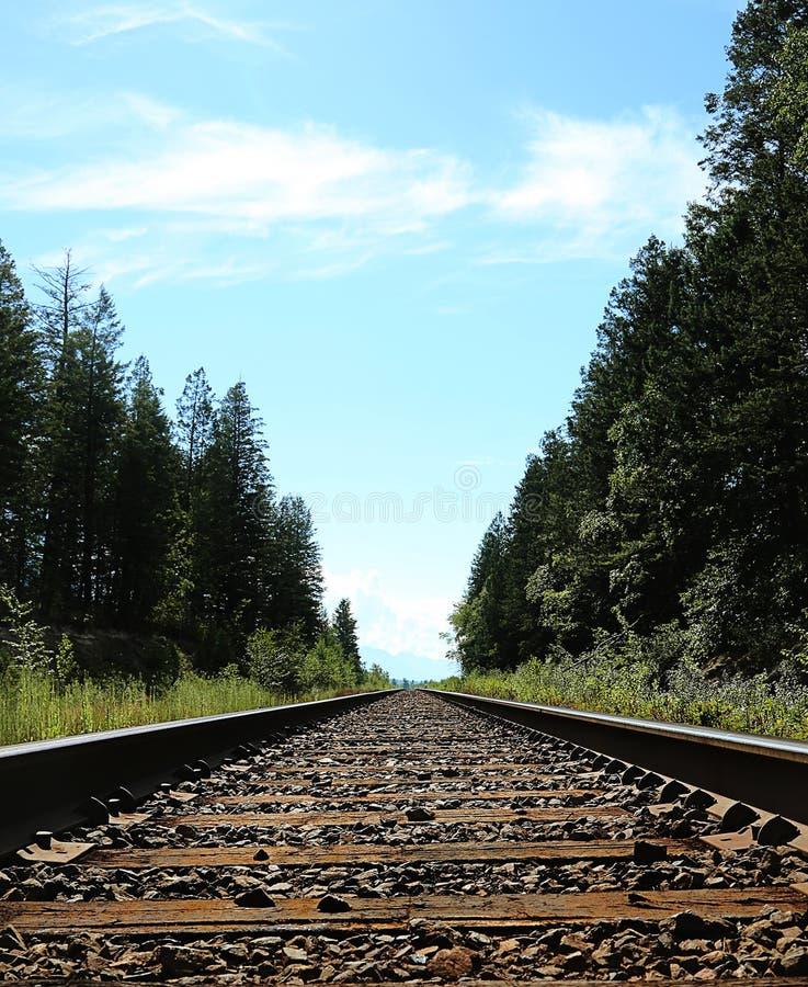 Поезд с деревьями с обеих сторон стоковые фото