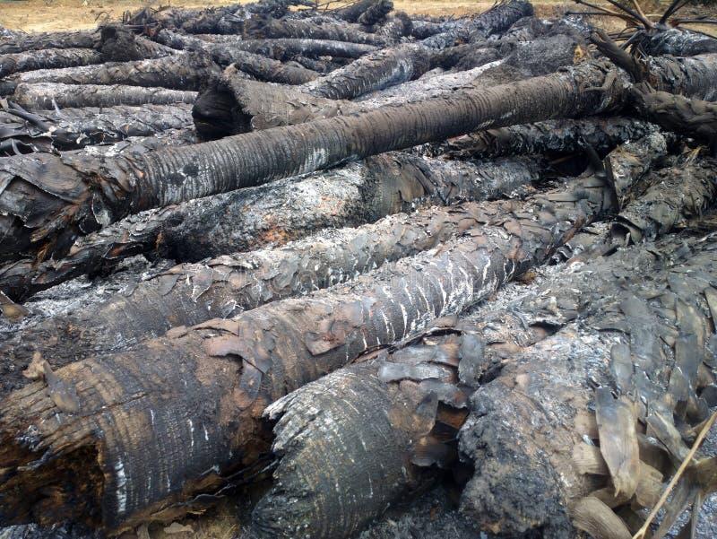 Пожарище в тропическом лесе стоковое изображение rf