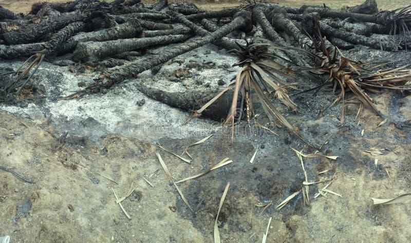 Пожарище в тропическом лесе стоковое фото