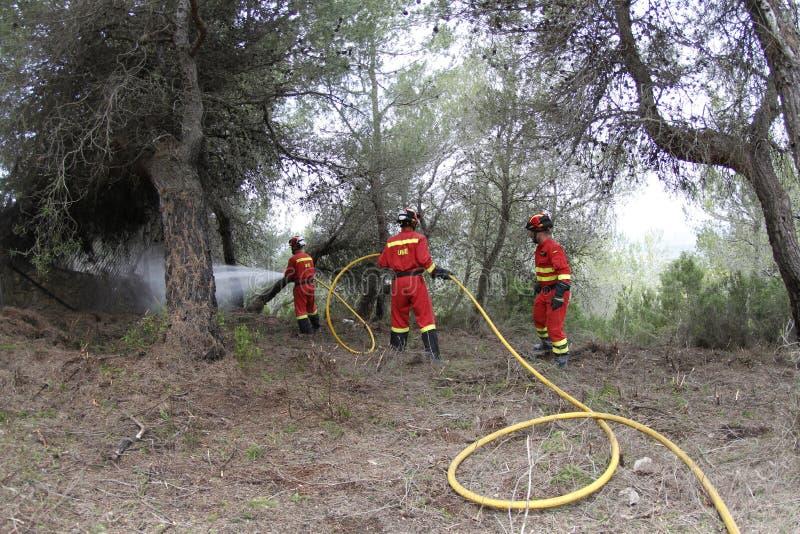 Пожарные на лесе стоковое изображение