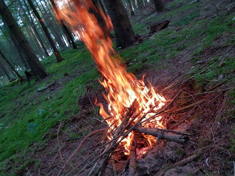Пожар в лесе стоковое изображение