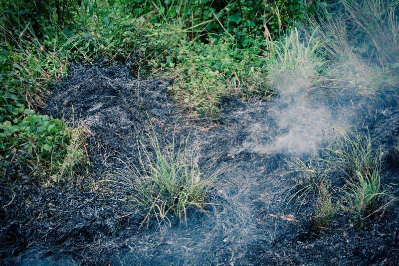 Пожар в траве стоковые изображения rf