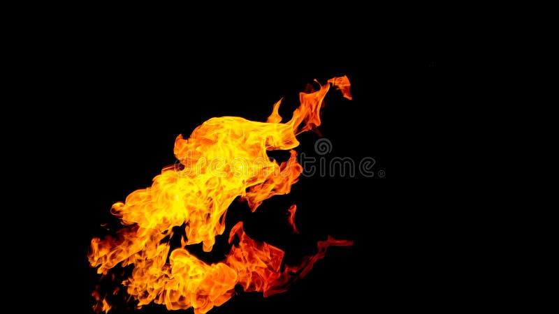 пожар детали предпосылки черный пылает хорошая вертикаль highlights мягко огонь на черной изолированной предпосылке Картины огня стоковая фотография