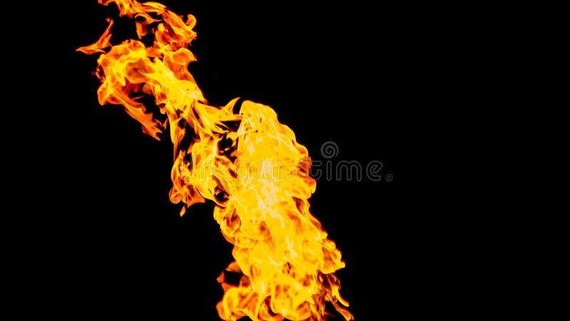пожар детали предпосылки черный пылает хорошая вертикаль highlights мягко огонь на черной изолированной предпосылке Картины огня стоковое изображение