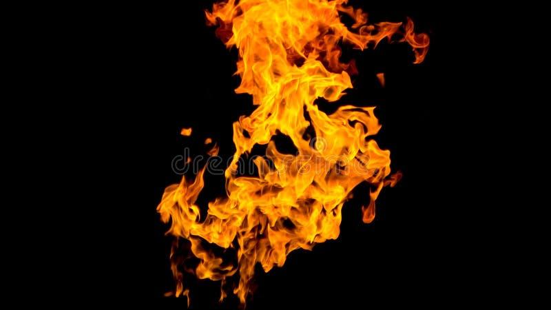 пожар детали предпосылки черный пылает хорошая вертикаль highlights мягко огонь на черной изолированной предпосылке Картины огня стоковые изображения
