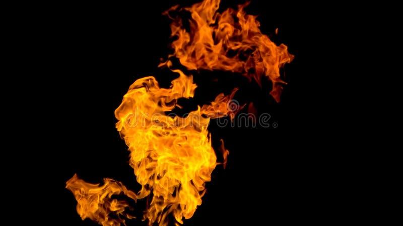 пожар детали предпосылки черный пылает хорошая вертикаль highlights мягко огонь на черной изолированной предпосылке Картины огня стоковые изображения rf