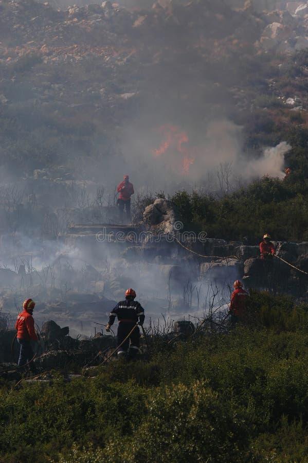 Пожар и пуща стоковое изображение