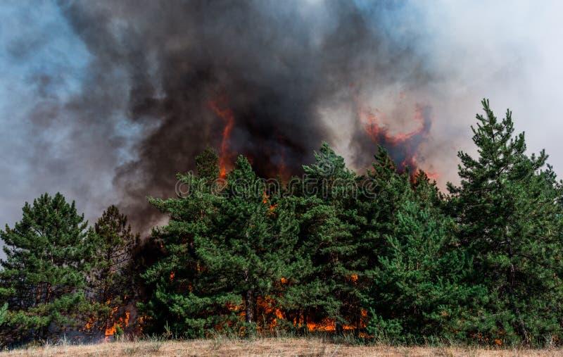 пожар лесной пожар на заходе солнца, горящий сосновый лес в дыме и пламена стоковое фото
