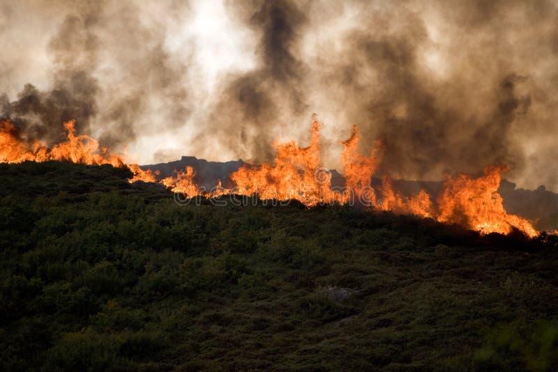 пожар обезлесения стоковые фотографии rf
