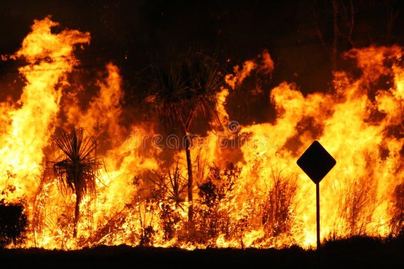 пожар bush стоковая фотография rf