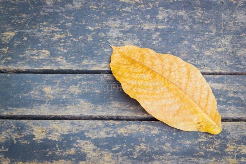 Пожелтейте высушенные лист осени на деревянной предпосылке с copyspace стоковые фотографии rf