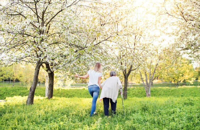 Пожилая бабушка с природой костыля и внучки весной стоковое фото