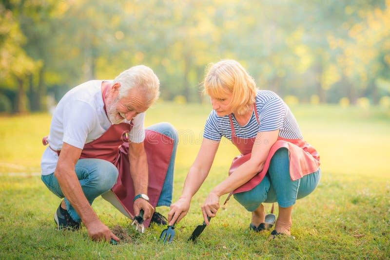 Пожилая газета чтения пар в саде на заходе солнца Любовь пар концепции старшая стоковые изображения