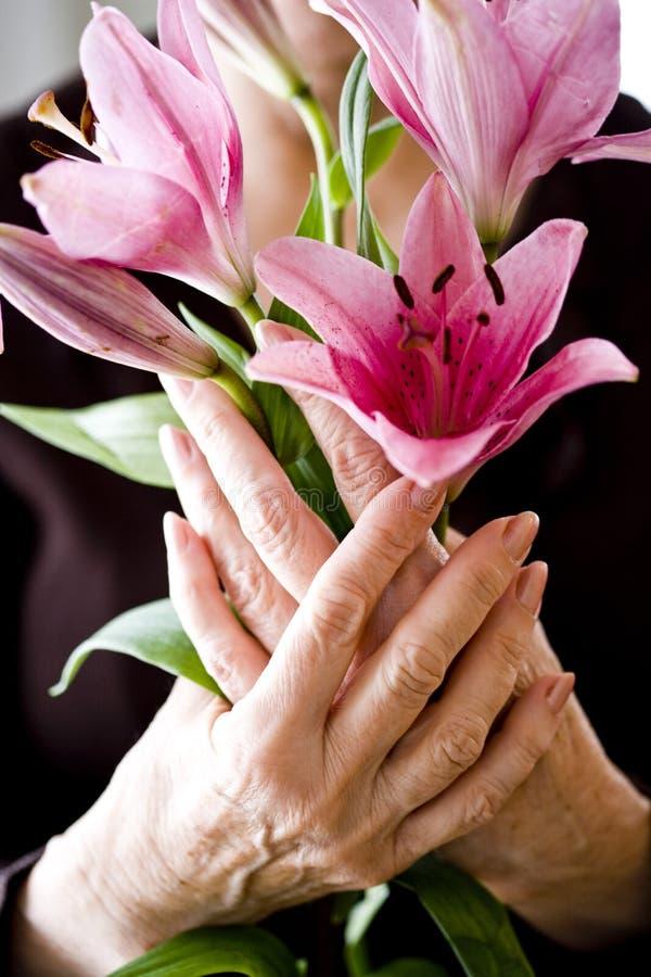 пожилые руки цветков держа пинк стоковое изображение
