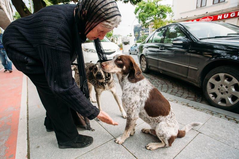 Пожилая женщина дает руку к бездомной собаке на улице стоковые изображения
