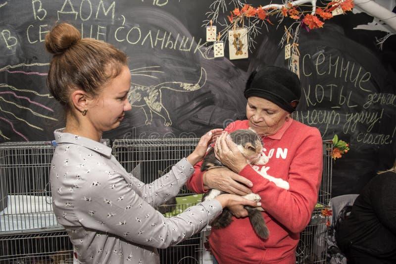 Пожилая женщина на выставке, распределении котов от укрытия стоковая фотография rf