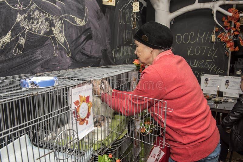 Пожилая женщина на выставке, распределении котов от укрытия стоковые изображения rf