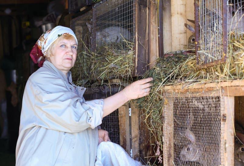 Женщина позаботится о кролики на ферме стоковое фото rf