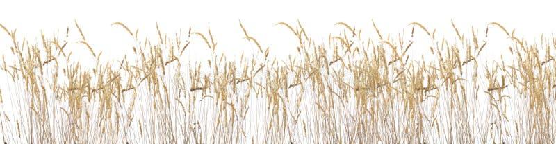 поздним летом травы стоковое изображение rf